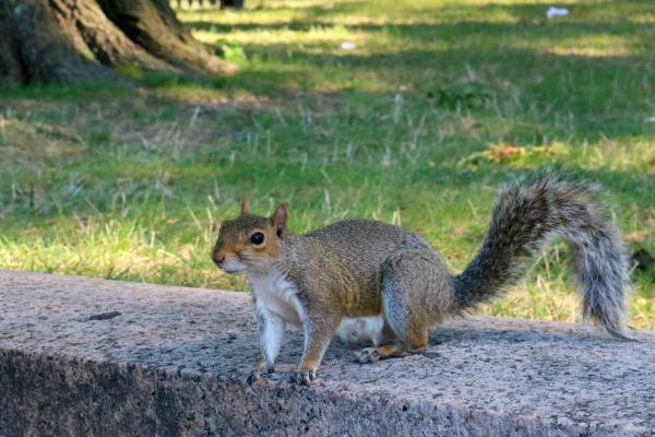 Ein Ausflug nach Washington D.C.und noch ein paar Tage in New York | Squirrel in Lower Senate Park