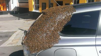 Abeja reina quedo atrapada en un carro y mira lo que sucedió
