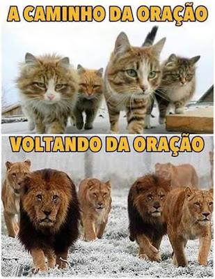 Antes e depois da oração. Gatos e leões. _ Eliseu Antonio Gomes - Mil Coisas e Imagens