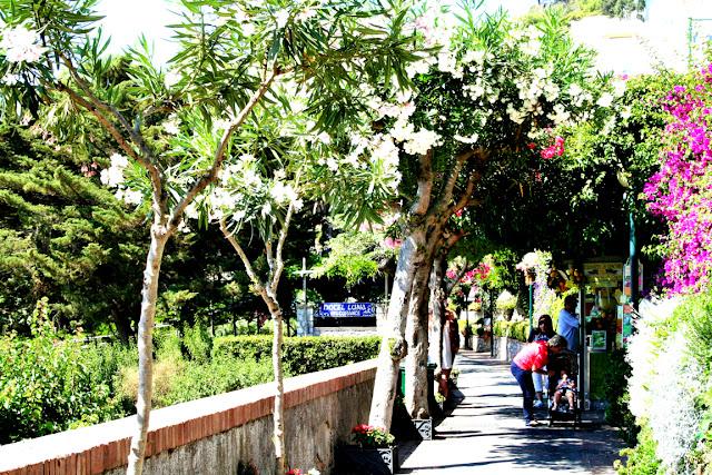 viale, alberi, verde, turisti, Capri
