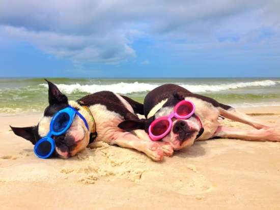 2 Dogs on the Beach Diving Glasses Dog Gear
