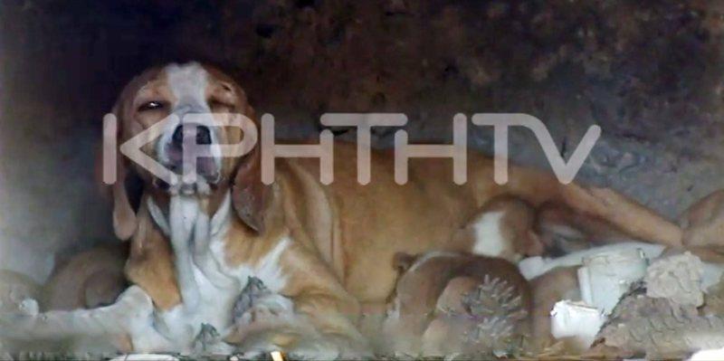 Κτηνωδία στην Κρήτη: Έκλεισαν σκυλίτσα με τα κουτάβια της σε αναμμένο φούρνο! (βίντεο)