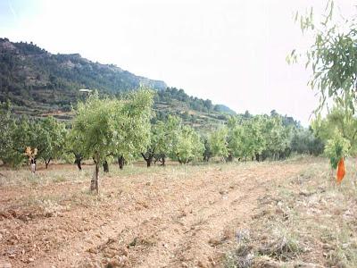 La pileta, camino, pantano de Pena, embalse, finca, almendros, olivos 11