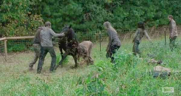 Muerte caballo en  The Walking Dead 5x13 - Forget