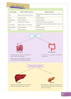 6. Sınıf Fen Bilimleri Ders Kitabı Cevapları Sevgi Yayınları Sayfa 53
