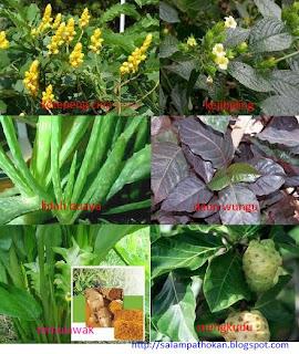 tanaman obat untuk sembelit atau konstipasi