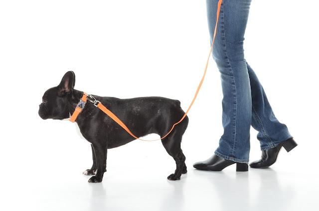 Faire promener son chien