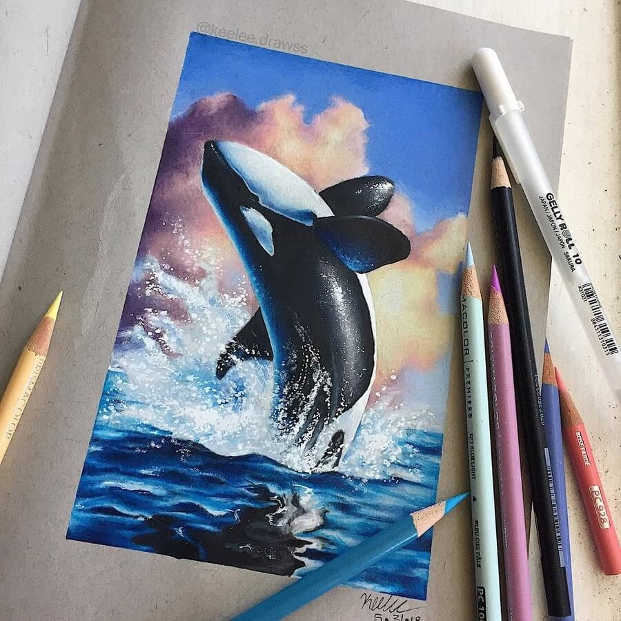 01-Orca-Whale-Keelee-www-designstack-co