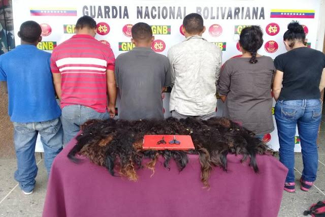 Apoltronar a 6 ladrones de cabellos en Carabobo - Las famosas pirañas