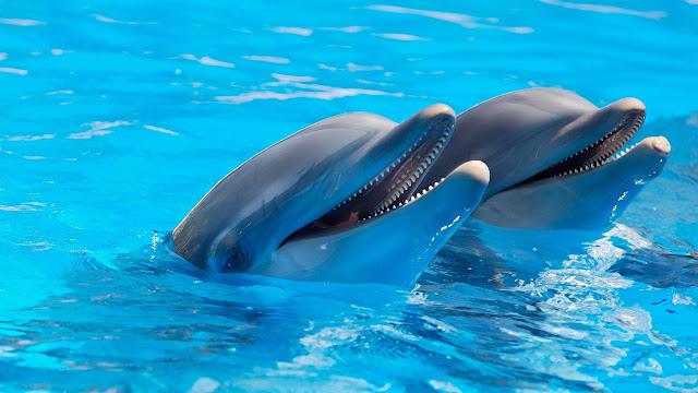 dolphin cruises Gulf Shores