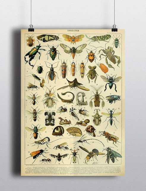 bug illustrations