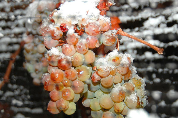 A Look At Ice Wine