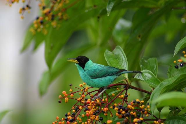Gara-gara Seekor Burung