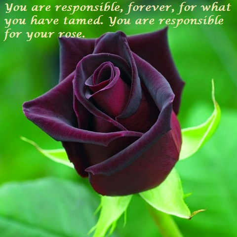 Rose Day Special Colourful Roses Quotes Dp Images Status