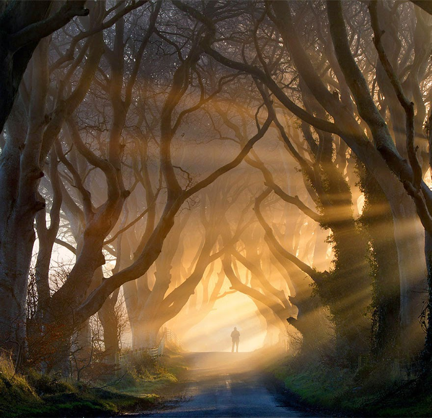 This majestic forest located in Stranocum, Ireland holds all sorts of mystical delights. No telling who awaits at the end of the tree tunnel–be they naughty or nice. - Tiny Humans Lost In The Majesty Of Nature