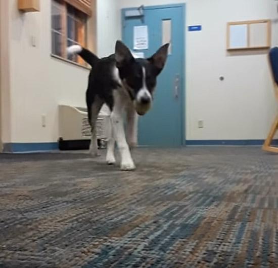 Cachorro que late baixo - Img 2