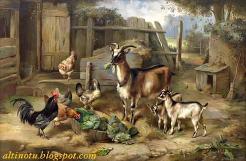 Keçi, gıdıklar ve tavuklar