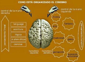 5 ejercicios para nivelar el cerebro lógico y el creativo. Cómo está organizado el cerebro