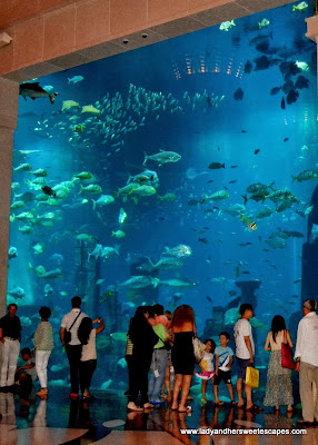 Ambassador Lagoon at Atlantis The Palm