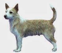 The Akc Recognizes Iii Novel Canis Familiaris Breeds Inwards 2013 | Run Across The Breeds 2