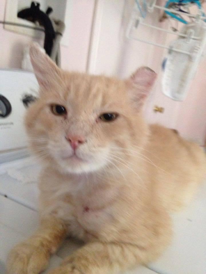 Cat Rescues Needing Food