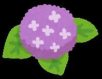 アジサイのイラスト(紫)