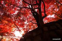 RAW現像したミジの紅葉写真