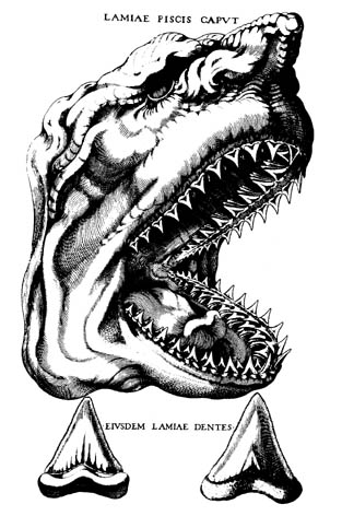 History of Geology: Nicolas Steno and the Origin of Fossils