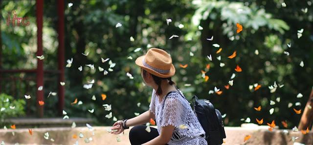Butterflies Season In Cuc Phuong National Park, Ninh Binh