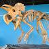 Fosil Dinosaurus Imut