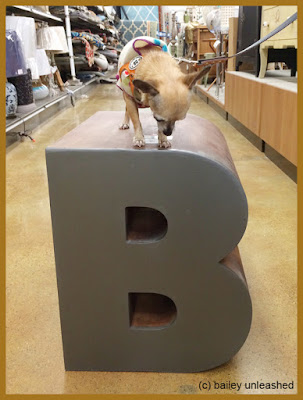 B is for Bailey