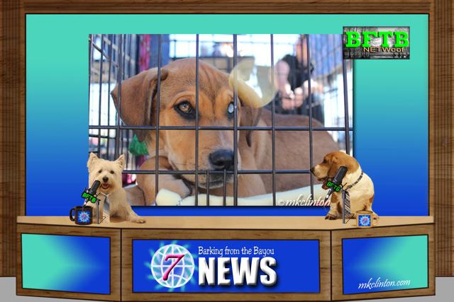 BFTB NETWoof News set with shelter dog on backscreen