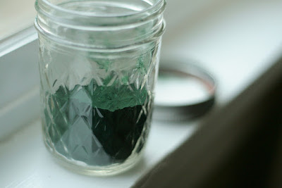 Spirulina Health Benefits :13 Important Benefits for Health