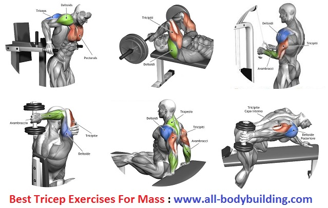 Tricep Exercises For Mass