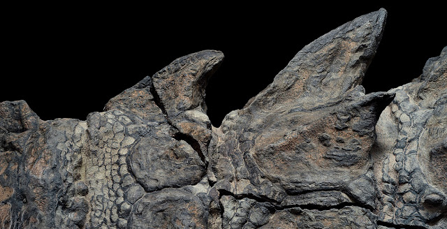 'Dinosaur mummy' emerges from the oil sands of Alberta