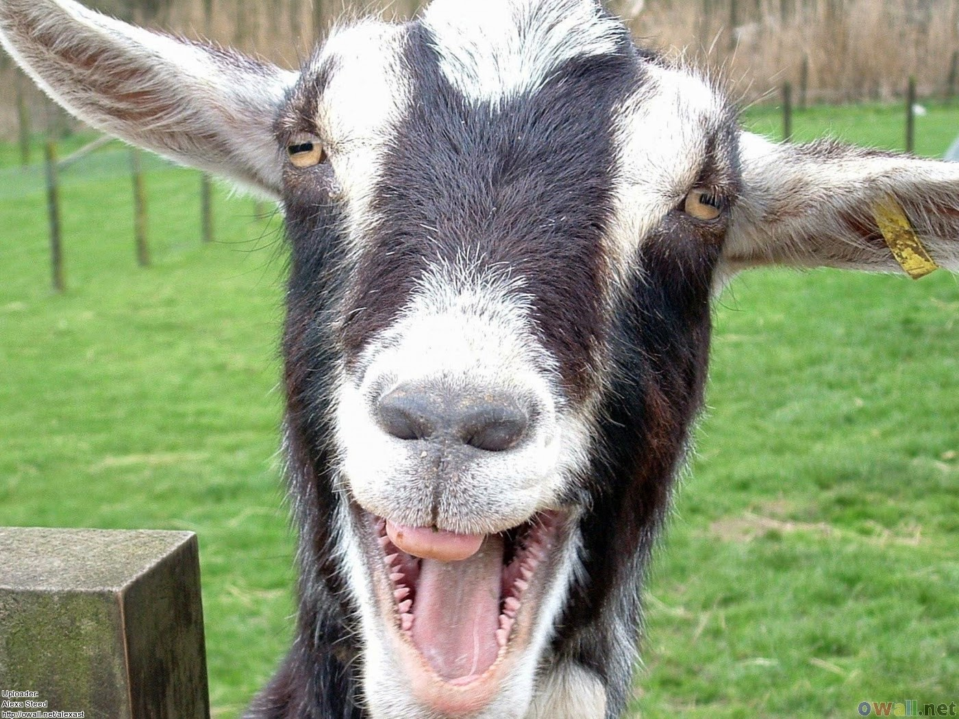 Inspiration by Goat #Laughlink