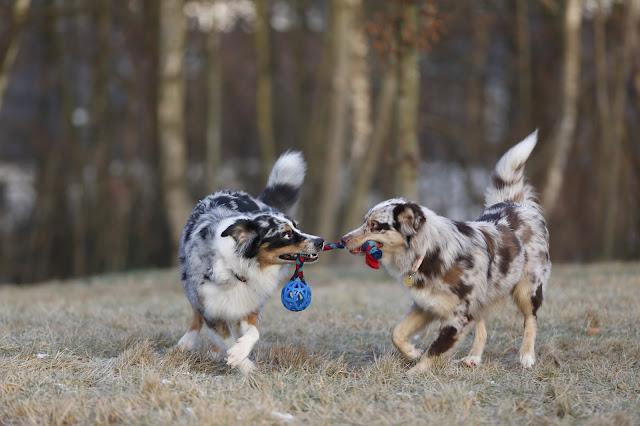 Hund, Hundeblog, Ruhrgebiet, Zweithund