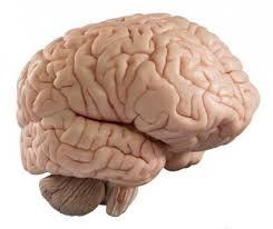Antara Makanan, Nutrisi dan Otak