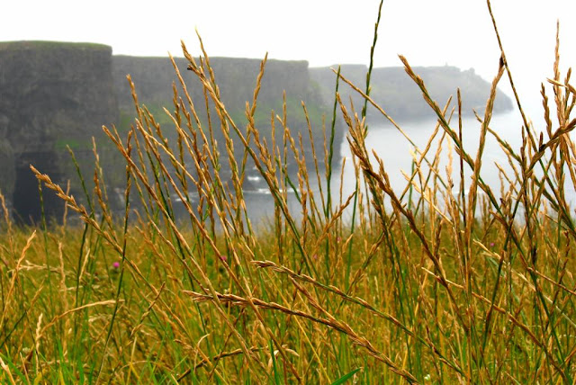 view of the CLIFFS OF MOHER grass at the front