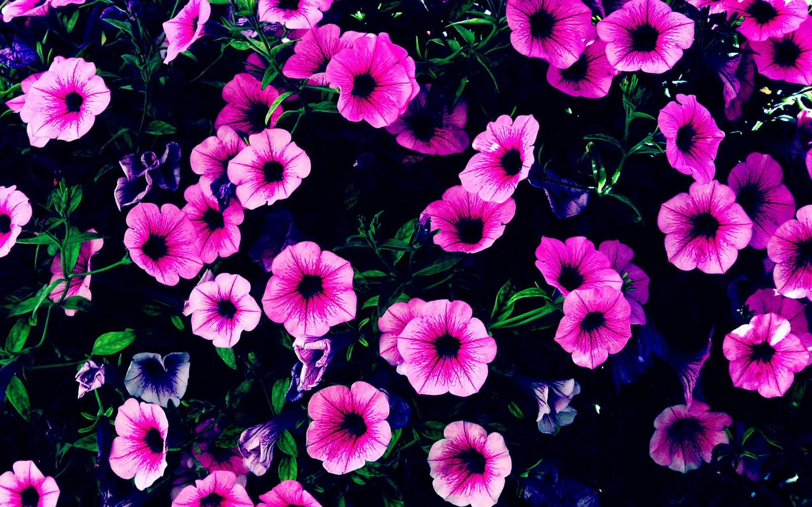 purple flower desktop wallpaper - photo #24