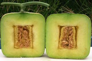 melon-kotak,www.healthnote25.com