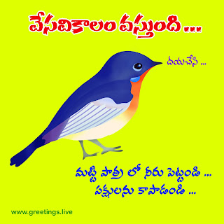 Please keep water in a bowl  to Save Birds from summer Image in Telugu language
