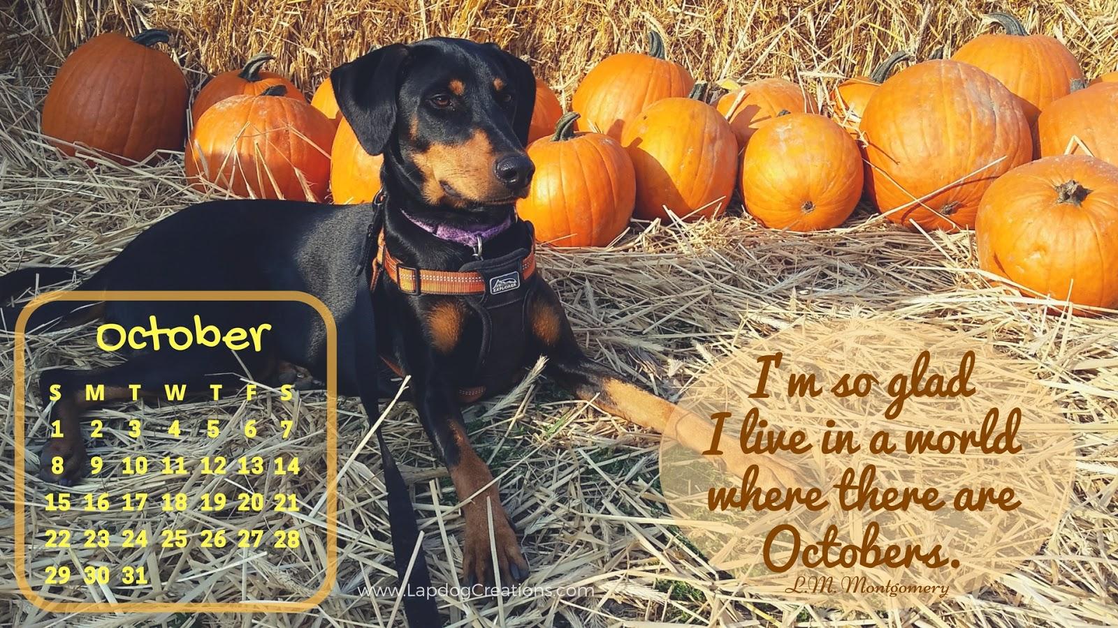 Doberman Rescue Dog Pumpkin Patch October