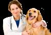 4 أشياء يجب معرفتها عن الطبيب البيطري