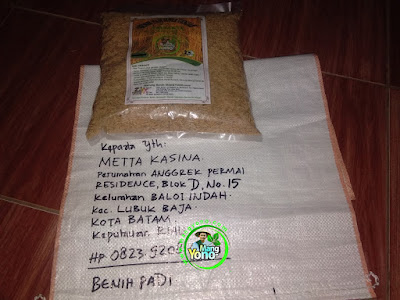 Benih pesanan METTA KASINA Batam, Kep. Riau  (Sebelum Packing)
