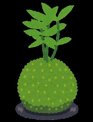 苔玉のイラスト
