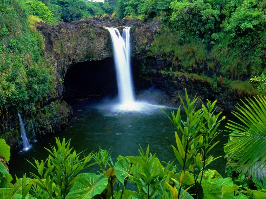 Forest Reserve Big Island