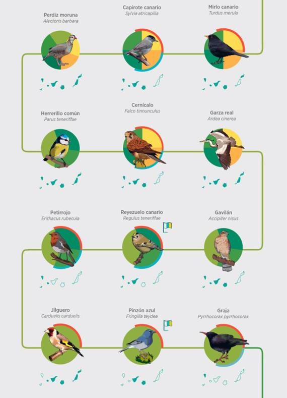 Aves de las Islas Canarias