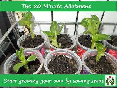 Sowing seeds Start growing your own Green Fingered Blog