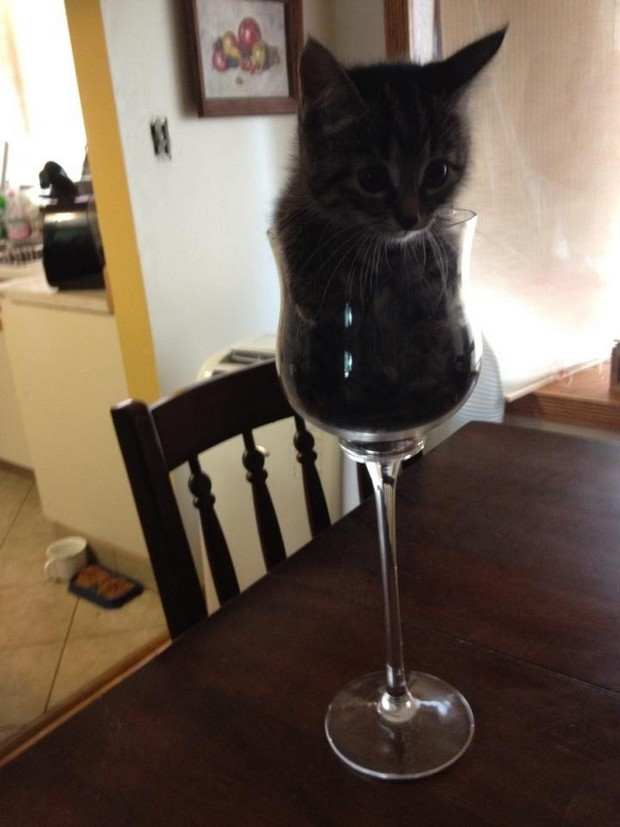 cats are liquids 2
